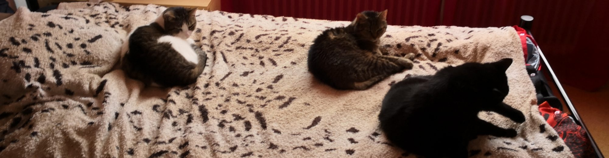Cats blog